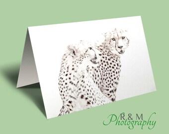Cheetah Greeting Card, african wildlife greeting card, blank cheetah card, cheetah photo blank greeting card, blank african wildlife card