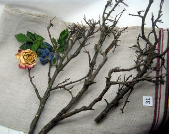 blackthorn branches with lichens, magical wood, blackthorn spikes, branch for craft, centerpiecies, home decor