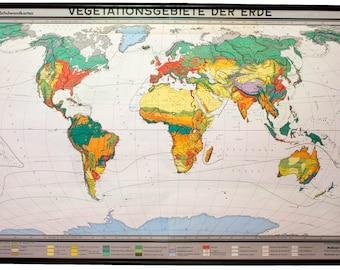 Vegetation of the earth, educational chart , 1959