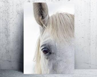 horse print, horse print wall art, horse printable, horse print art, printable art, horse photography, printable wall art, digital prints