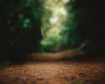 Forest/Road/Trees/Fantasy- Digital Background