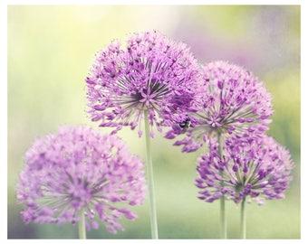 flower photography, mauve, honey bee, nature photography, flower wall art, floral art print, romantic home decor, fine art photography
