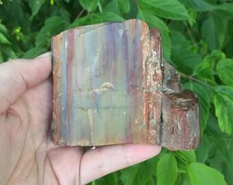 Petrified wood chunk - Arizona