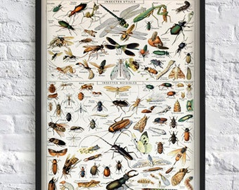 Insect poster illustration print beetle fly print wall art print sсience illustration insect book plate print animal poster 5x7 8x10 12x16