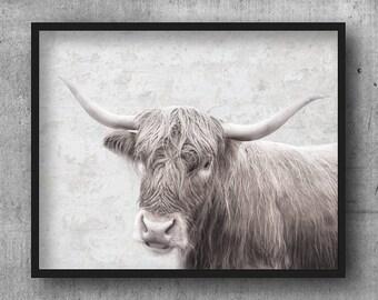 Highland Cow Print - Farm Animal Wall Art, Digital Download, Cow Poster, Modern Photography, Animal Photo Art, Cow Peekaboo, Nursery Print