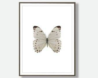 White Butterfly, Butterfly Photo, Printable Butterfly,  Butterfly Art, Butterfly Print, Butterfly Poster, Butterfly Decor, Butterflies