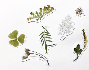 Plant sticker • Dried flowers sticker for planner • Botanical decal for laptop • Natural planner stickers with leaves • Pressed flowers •