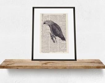 Pressure EXOTIC BIRD - antique book page - portrait