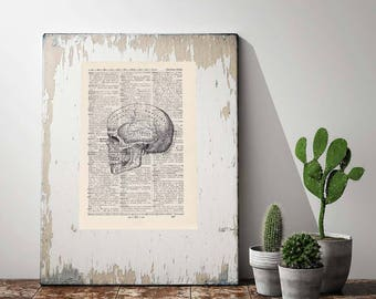 Print Skull No. 3-On Antique page