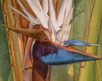 Birth, Tropical Bird of Paradise watercolor painting, detailed art print giclee, blue, green by Phyllis Nathans