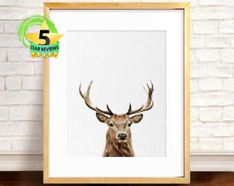 Baby Deer Print, Deer Print, Nursery Printable, Baby Deer Fawn, Baby Animal Print, Baby Shower Gift, Woodlands Print, Baby Room Digital Art