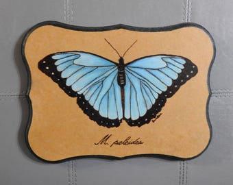 Blue Morpho Butterfly pyrography wall art