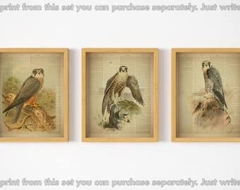 Dictionary art print, Set of 3 prints, Birds printable, Print set, Home wall decor, Bird wall art, Art print, Vintage, Gift for men, 8x10