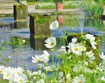 Daisies, white wildflowers, printable photo art, Kensington Palace, Sunken Garden, White Garden, Princess Diana tribute, instant download