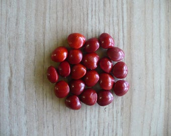 Red Sandalwood   Adenanthera pavonina   10 Fresh Seeds