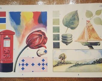 Vintage Mid-century Double-Sided Colour Illustration School Chart Print No.175
