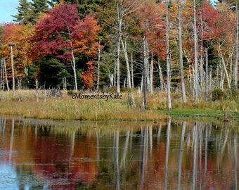 Foliage and Reflection