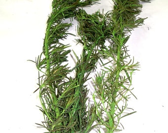 Preserved Rosemary Leaves,Preserved leaves, Green leaf, Preserved leaf for craft, Bouquet of leaves