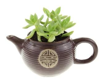 Tea Pot Planter Pot w/ Succulent - Succulent Pot, Tea Pot Planter, Succulent Planter, Succulent with Pot, Teapot gifts, Indoor Plant Gifts