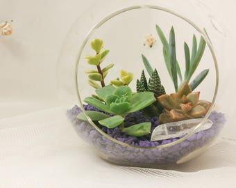Queen around the Globe,  Succulent terrarium with purple rocks, sleek indoor home decor, modern hanging glass, diy kit, cactus garden