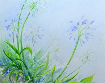 Scillonian Agapanthus...a print from an original watercolour by Gillian Ousby.