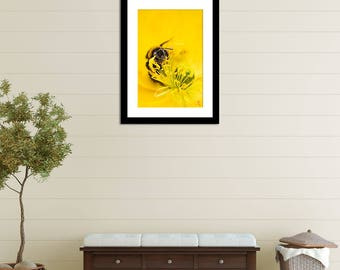 Beautiful Floral Bee Stock Photography - Bumblebee on Yellow Flower (High Resolution Download)