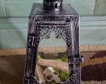 Decorative Lantern Encasing Dried Moss, Stream Smoothed Driftwood, and a Small Animal Skull
