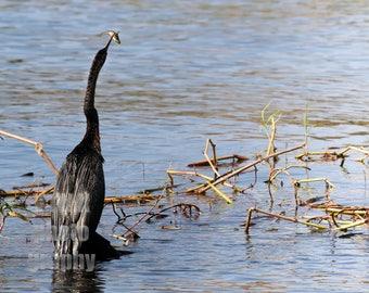 Feeding Time Bird