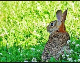 Garden Bunny (Photo)