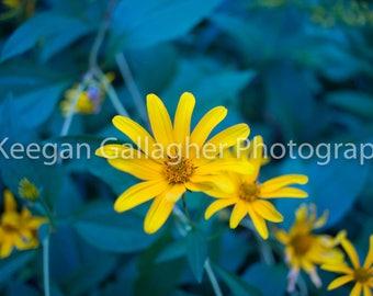 Yellow Shining Through the Blue