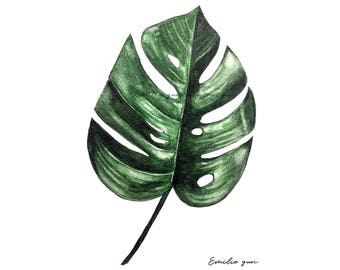 Reproduction Aquarelle - Feuille de Monstera