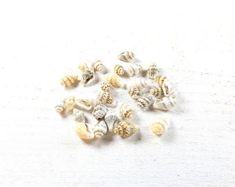 50 natural seashells around 10 to 15mm x 6 to 9mm LBP00690