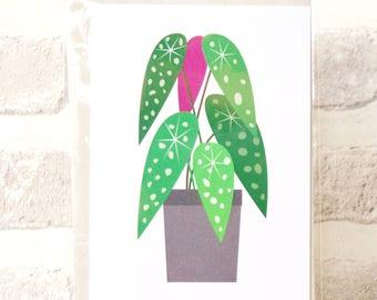 Begonia Maculata Houseplant Art Print Greetings Card