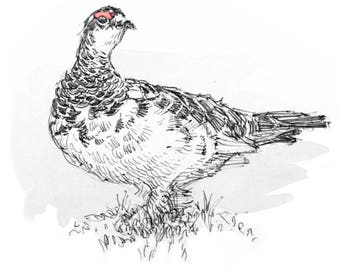 Rock Ptarmigan Greeting Card