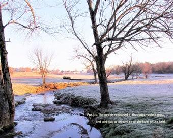 Frosted field near Tenn stream