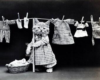 Black and white cat photo, Cat doing laundry,