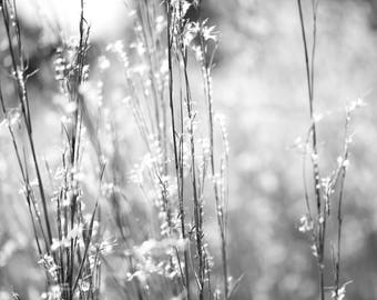 Black and White Photo of Grass in the Sun II  //  Nature Photography in Austin, Texas