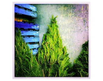 Photographic Greeting Card: Is it Christmas for the Tree