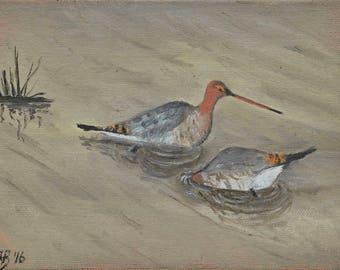 "Black-tailed Godwits, Slimbridge, small unframed original oil painting, canvas board 5x7"""