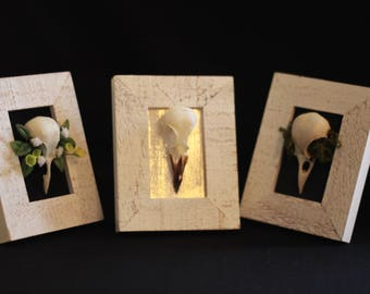 Eurasian Magpie Mini-Frames