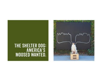 Shelter Dog chalk art