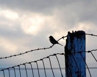 50% OFF SALE Bird Photography Gray and Blue Wall Decor Animal Photo Nature Decor Landscape Photo 5x5 inch Fine Art PhotographyPrint On The F