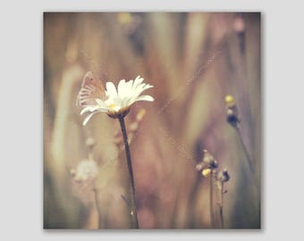 Zen Butterfly on Daisy Flower Soft Photo Wrapped Canvas Square Wall Art