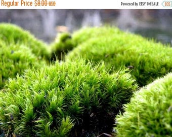 Save25% Terrarium Moss-Mood Moss-Frog Moss-Live Dicranum Moss for Terrariums and Vivariums-Fairy Garden Forest-Sandwich bag