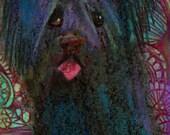 original art  aceo drawing skye terrier dog