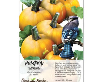 Pumpkin Seeds, Baby Pam (Cucurbita pepo) Non-GMO Seeds by Seed Needs