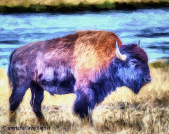"Yellowstone Buffalo Fine Art Print: Fine Art Print Available in 5x7"", 8x10"", 11x14"", 13X19"
