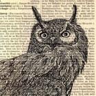 owlstudio