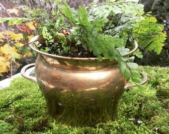 Vintage brass planter pot with handles