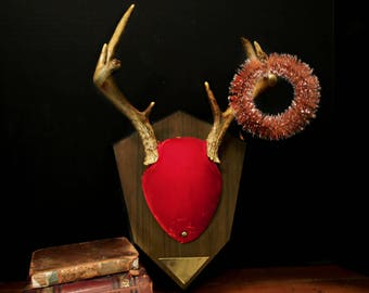 Vintage Real Deer Antler Mount / Rustic Antlers Mounted on Wood Medallion / Taxidermy / Christmas Decor / Cottage Wall Decor